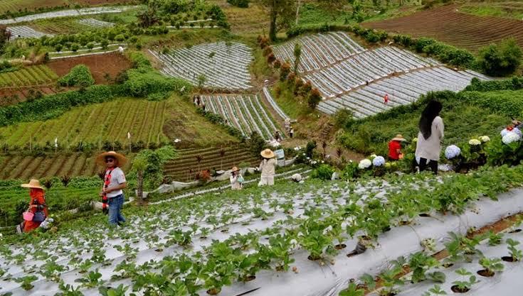 Agro Wisata Kebun Raya Tongkoh