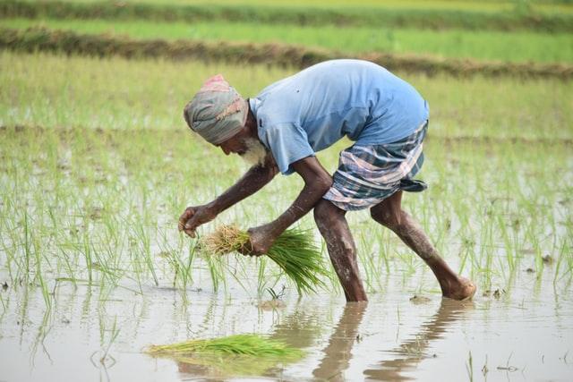Harga komoditas pertanian sangat penting bagi para petani