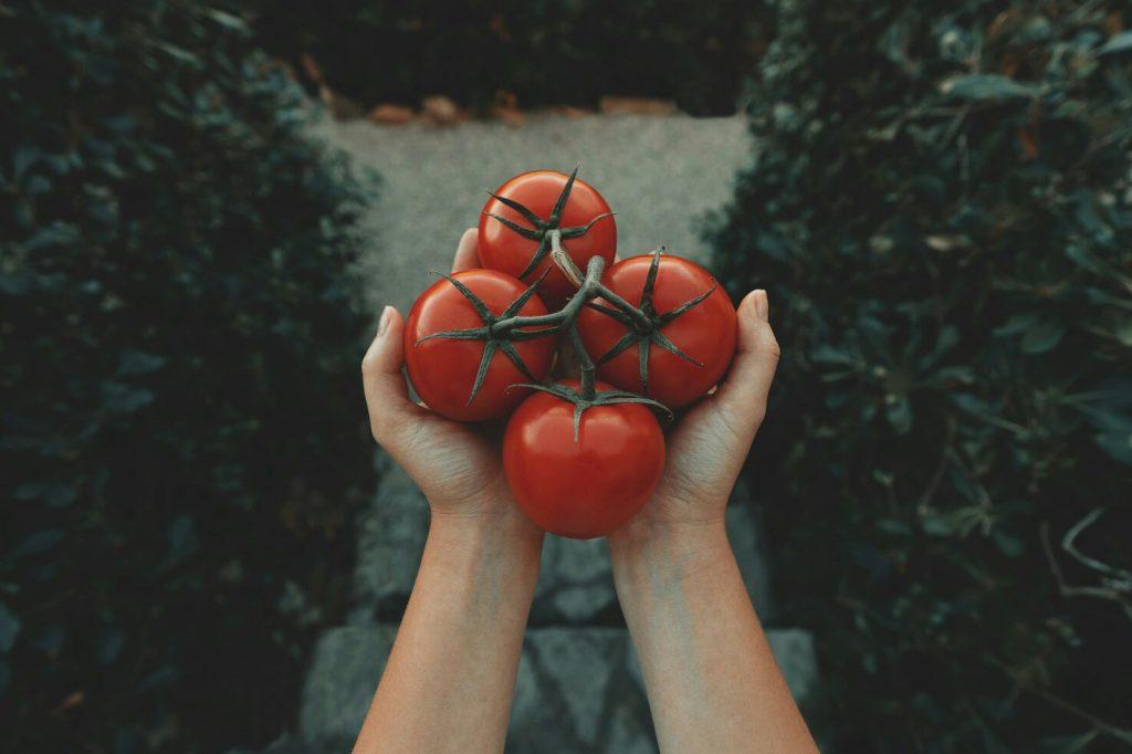 Gambar tomat yang jika di konsumsi terlalu banyak dapat meningkatkan asam lambung naik