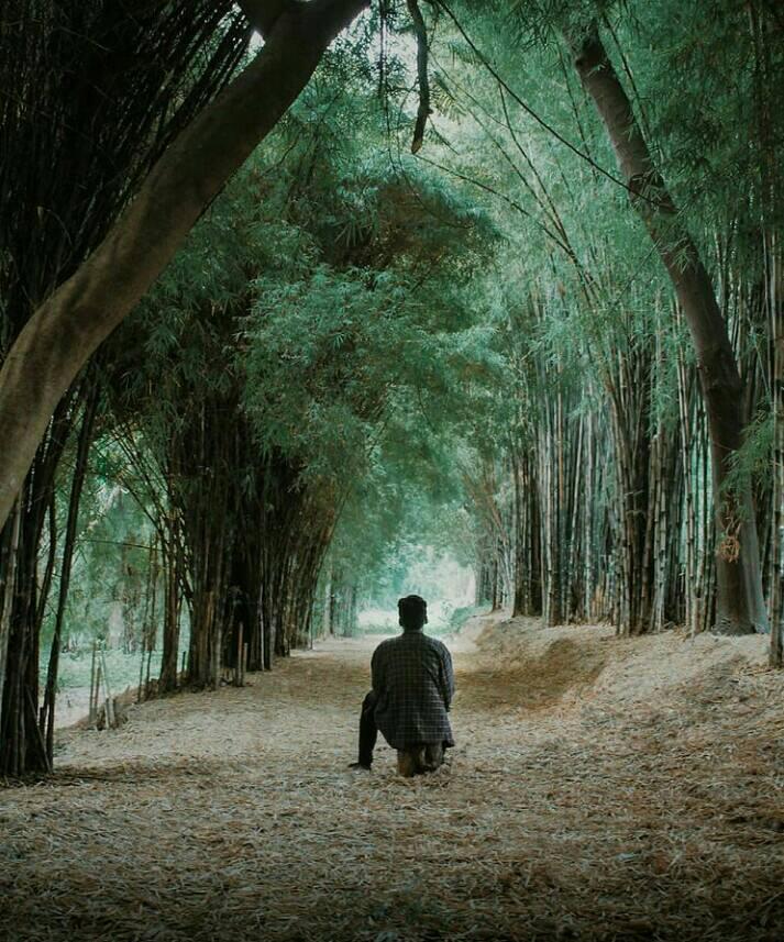 Gambar Hutan Bambu