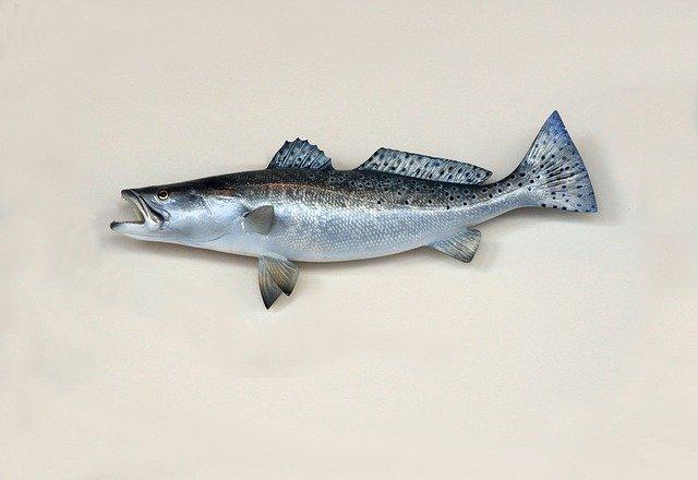 Gambar Ikan yang mempunyai manfaat untuk imun tubuh anak