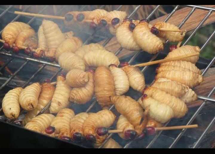 Gambar sate ulat sagu yang merupakan makanan khas Jayapura yang banyak diminati berbagai masyarakat