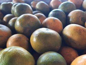 gambar jeruk